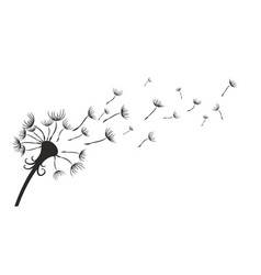 Field dandelion vector