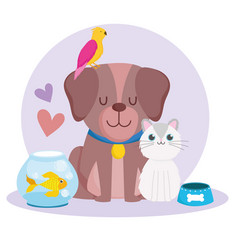 pets cute dog cat parrot fish animals and food vector image
