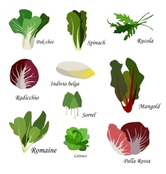 Salad ingredients Leafy vegetables icons set vector