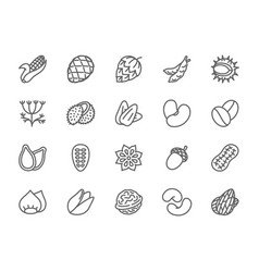 set of nuts seeds and vegetables line icons pack vector image