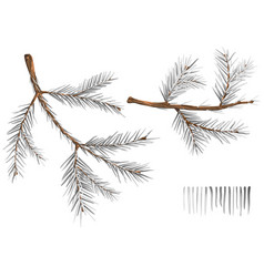 set wintry spruce branches vector image