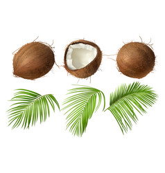 whole and broken coco nut with green palm leaves vector image