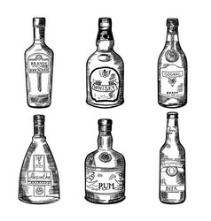 different alcoholic drinks in bottles vector image vector image