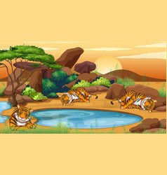 scene with tigers pond vector image