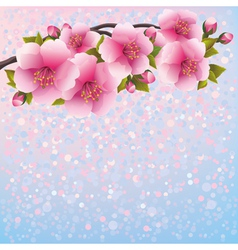Background with sakura blossom cherry tree vector