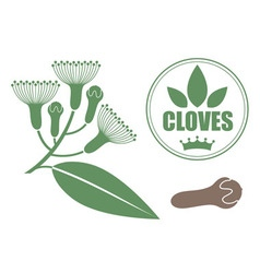 Cloves vector image