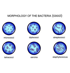 morphology of microorganisms cocci vector image