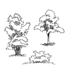 Set of hand drawn architect tree and bushes vector
