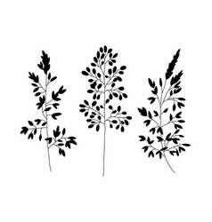 Wild and herbs plants set silhouette botanical vector