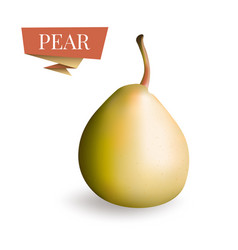 isolated picture of pear fruit 3d pear vector image