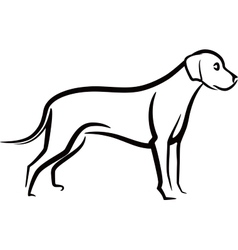 image an dog labrador on white background vector image