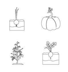Onion pumpkin and other vegetablesplant set vector