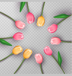 Pink 3d tulip flower circle on isolated background vector