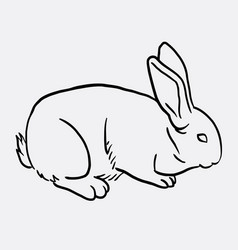 Rabbit pet animal sketch vector