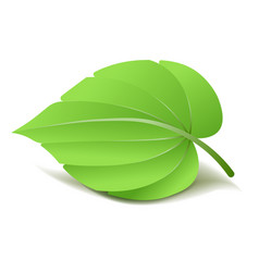 realistic green leaf isolated vector image