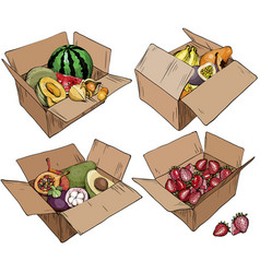set of cardboard box with various fruits vector image