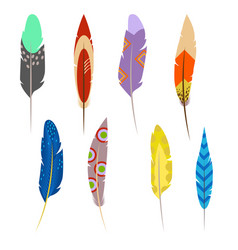 feathers of exotic birds set isolated on white vector image