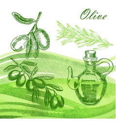 hand drawn olive twig with jar and rosemary on vector image