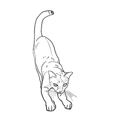 Adorable cute cat stretching body vector image