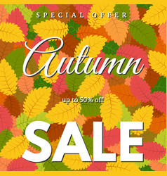 background with autumn leaves and autumn sale vector image