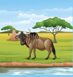 cartoon wildebeest in savannah vector image