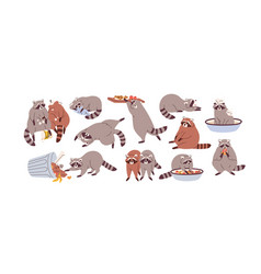 cute funny raccoons set slow lazy racoon vector image
