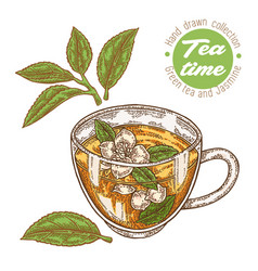 hand drawn cup tea green tea and jasmine vector image