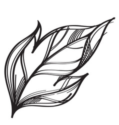hand drawn leaf outline isolated on white vector image