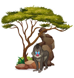 isolated picture baboon under tree vector image