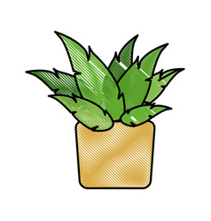 drawing pot plant decoration botanic natural vector image vector image