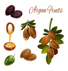 argan oil splash argan tree nuts cosmetic plant vector image