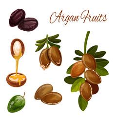 Argan oil splash tree nuts cosmetic plant vector