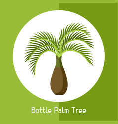 Bottle palm tree of exotic tropical vector