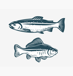 fishs such as trout and carp fishing concept vector image
