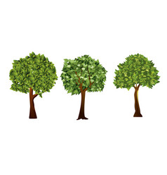 garden trees with green vector image