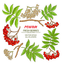 Rowan elements set vector
