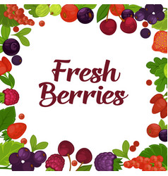 fresh tasty berries grown on farm promotional vector image vector image
