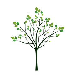young spring tree vector image