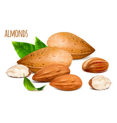 Almonds whole and almond vector