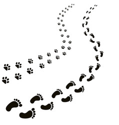 animal and human footprints isolated in white vector image