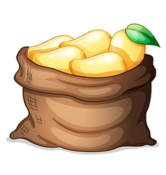 A sack of ripe mangoes vector image