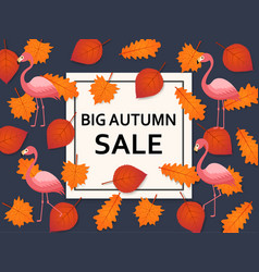 autumn sale background with leaves flamingo and vector image