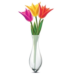Bouquet of tulips in a glass vase vector