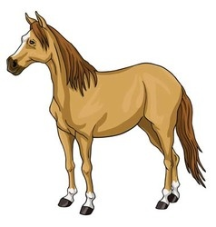 Brown Horse White Head vector image