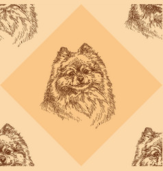 Seamless pattern with small pomeranian on orange vector