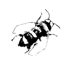 depicting a bee hand drawn vector image