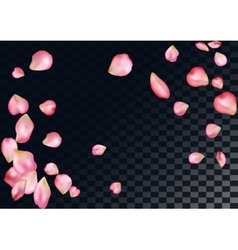 Abstract background with flying pink rose petals vector image vector image