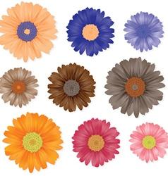 Gerbera flowers set vector image vector image