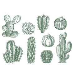 different cactus succulent plants sketch vector image