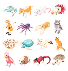 Exotic pets isometric icons vector